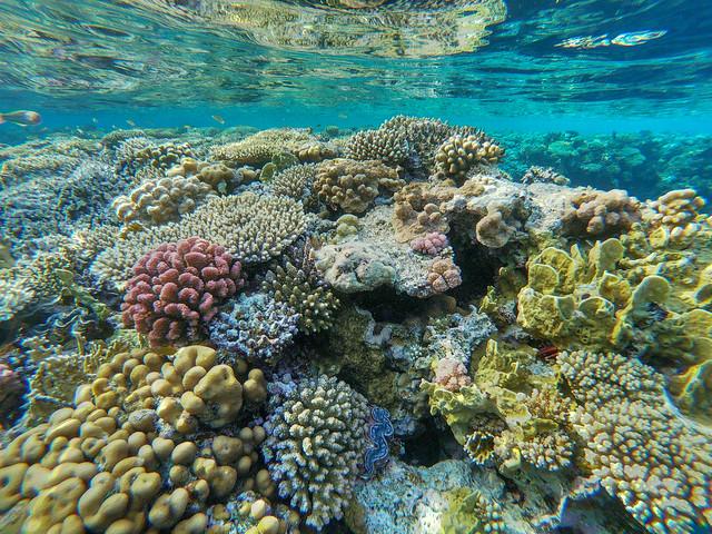 Coral reef, Sharm El Sheikh, Egypt