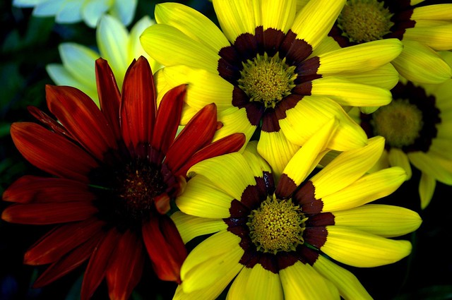 Yellow and Red Macro.