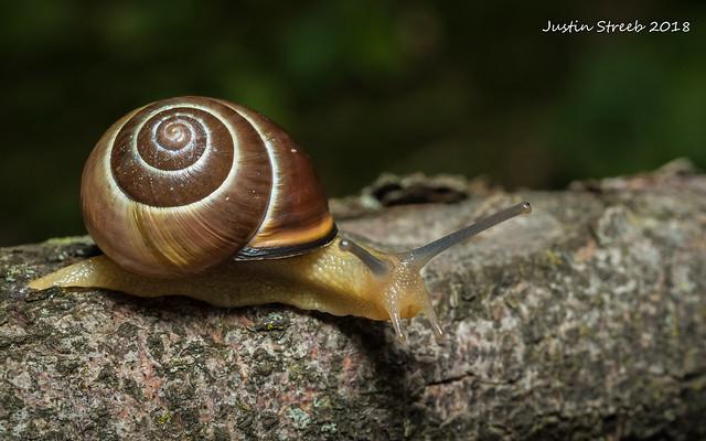 NY Snail 3