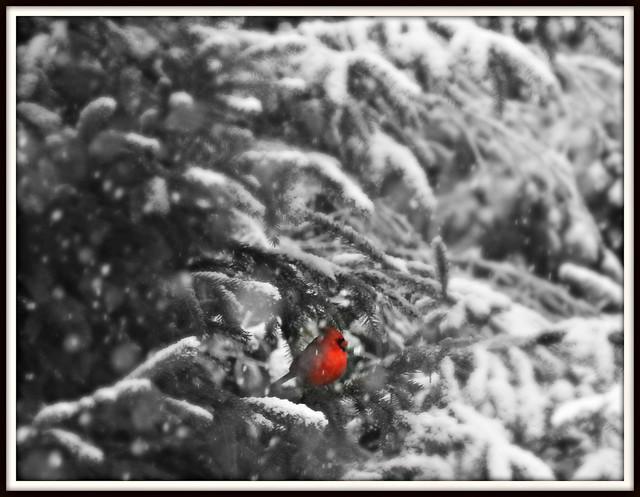 Cardinal moment