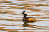 White-tufted Grebe by mathurinmalby