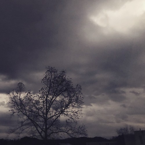 dark grey winter autumn wet cold dreary clouds tree