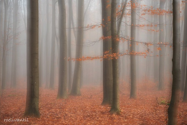 Mist in het bos/Art in nature