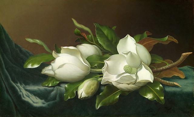 Martin Johnson Heade - Magnolias on Light Blue Velvet Cloth