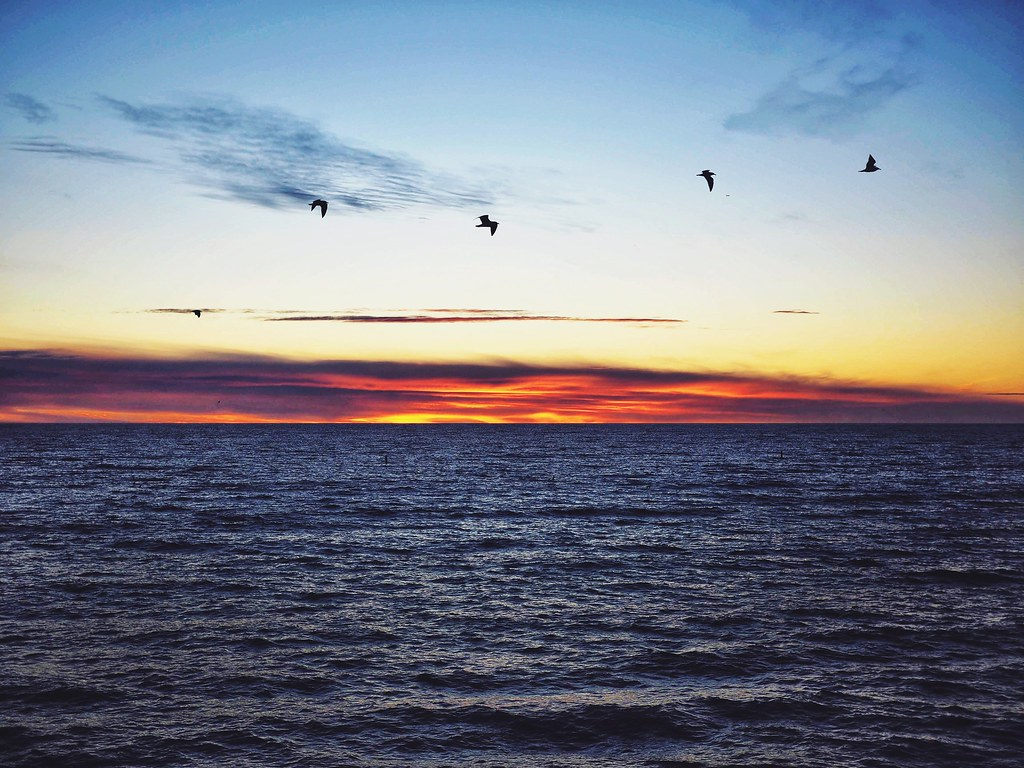 Birds over the ocean at sunset
