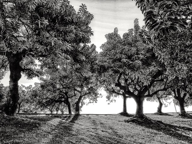 Arbres   -   Trees