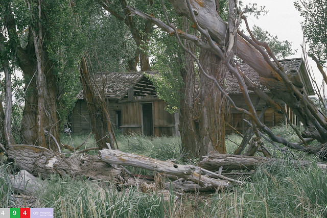 A Well Shaded Hideout On A Crancher Ranch