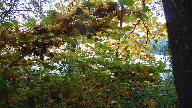 Autumn Fairytale 96