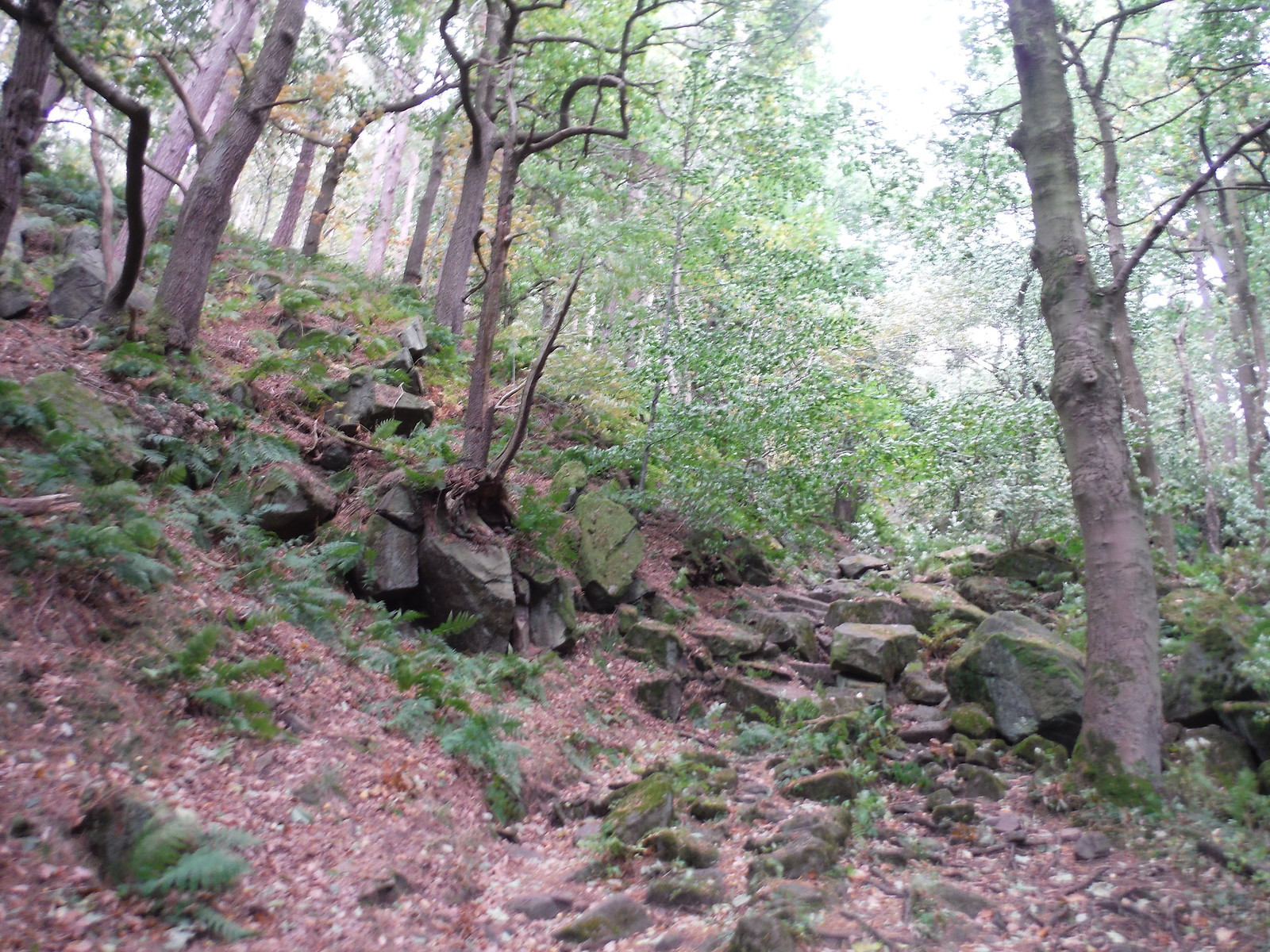 Steep Bouldery Path in Oak's Wood SWC Walk 322 - Grindleford Circular (via Chatsworth House)