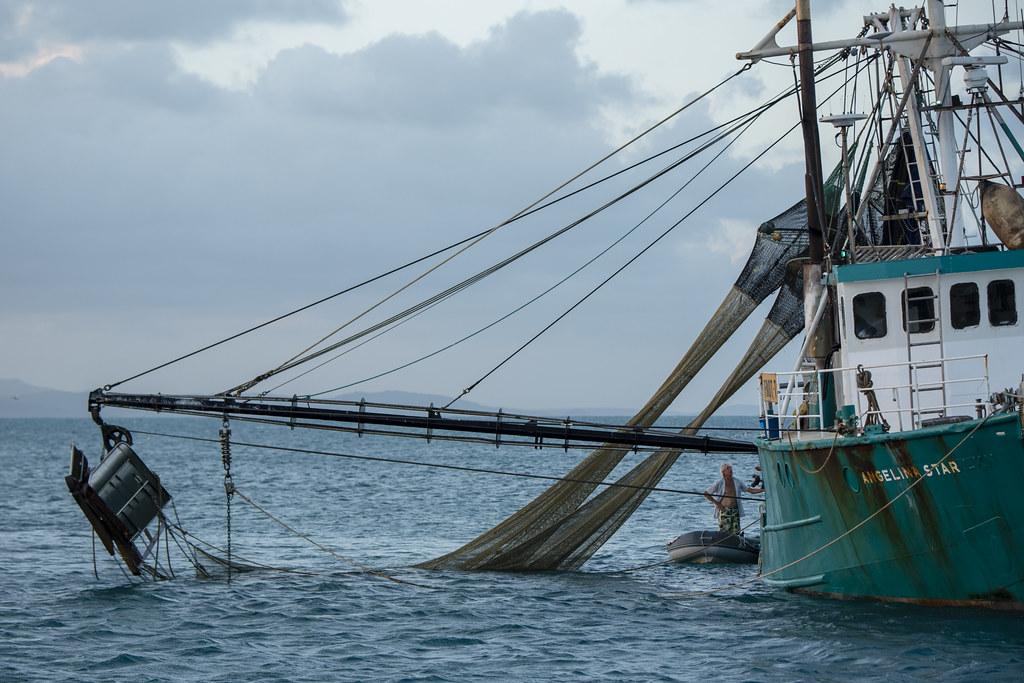Prawns   Buying fresh prawns from a Trawler is always a deli