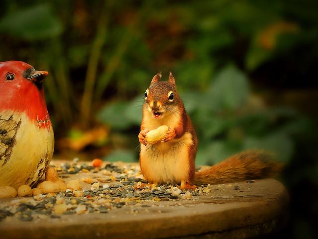 Talk To The Bird