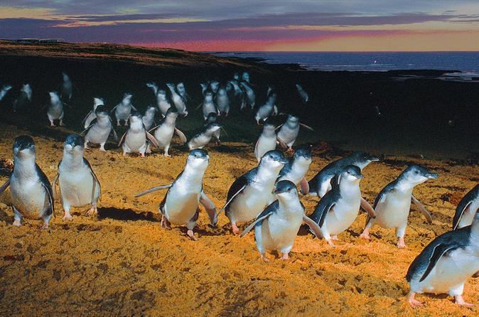 Image result for Penguin visitor centre australia