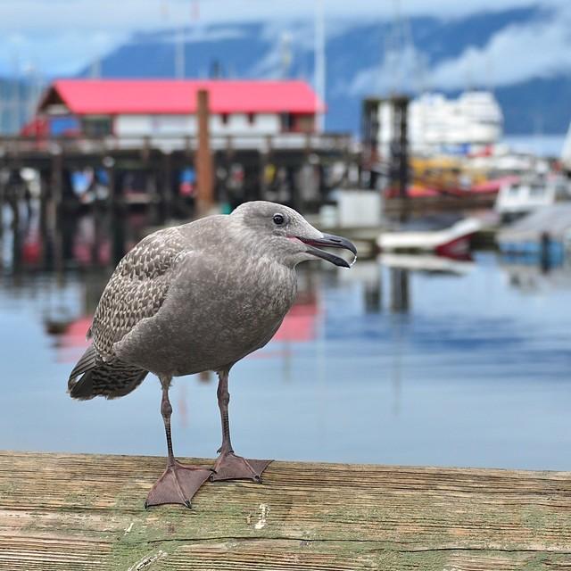 sittin' on the dock of Horseshoe Bay . . .