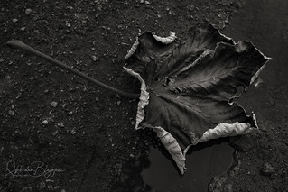 Leaf | by Slobodan Blagojevic