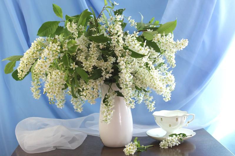 Обои букет, чашка, черемуха картинки на рабочий стол, раздел цветы - скачать