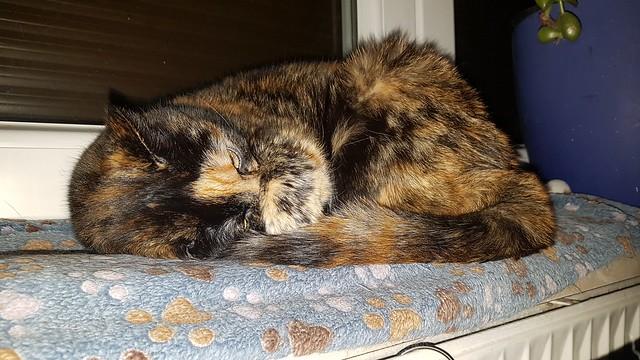 Bonsai - sleeping on the heater is the best!