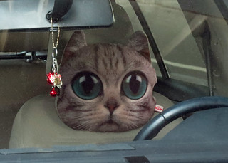 Incredible Cat Face Head Rest On Top Of Drivers Car Seat 181116 1408 Evergreenethics Interior Chair Design Evergreenethicsorg
