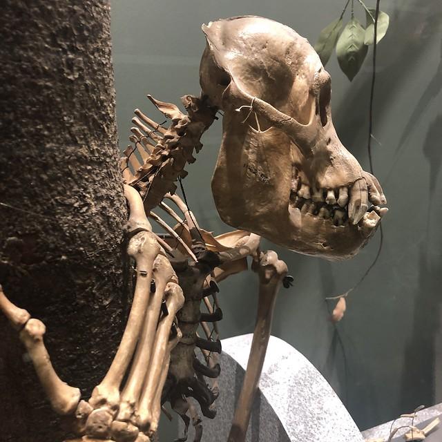 Orangutan Overlooks