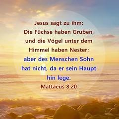 Matthaeus 8:20