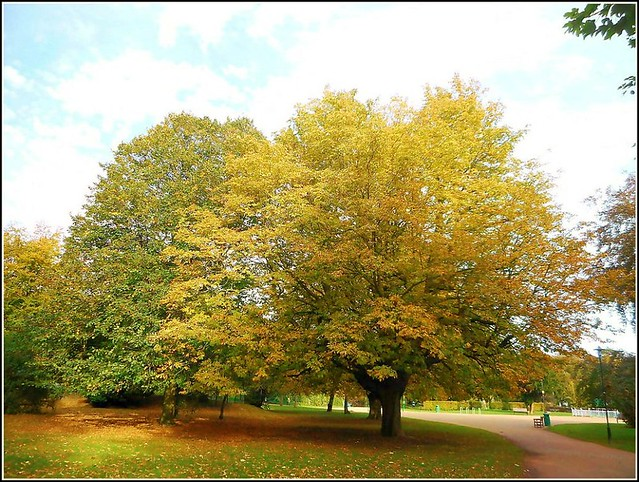 Typical Autumn Scene ...
