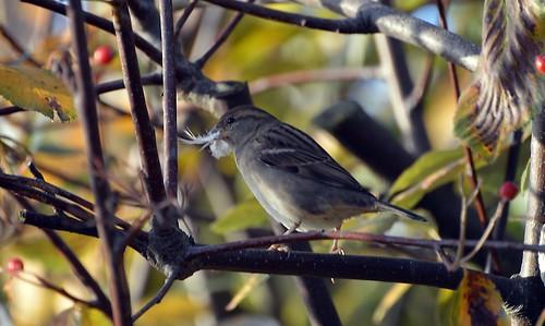 rainbowofnature supersix photographyvision wildbirds wildlife borntofly