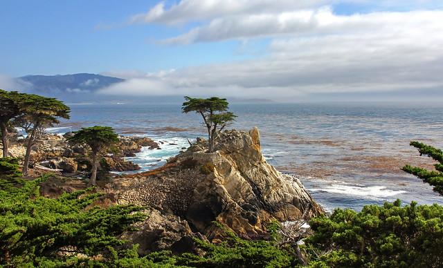 Lone Cypress-Seventeen Mile Drive-Monterey California 00498