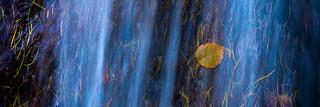 Autumn leaves | by piparinn