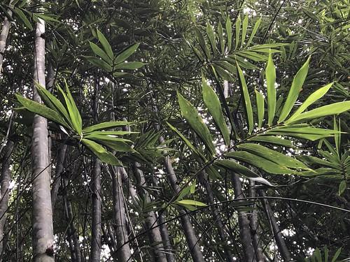 amazonia permatree ecuador valledelasluciernagas zamorachinche tropical permaculture farmlife