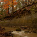 Autumn in the Pineywoods by Scott Wahlberg