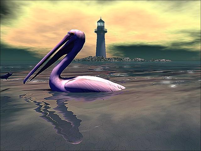 La Frontera - Pelican's Sunset Brief