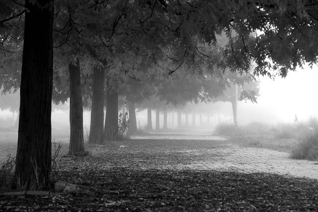 Fog inspires me ...