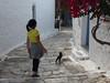 Amorgos, Chora, čtyřnohá kamarádka se rychle objeví, foto: Petr Nejedlý