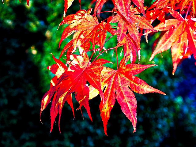 108 Herbst