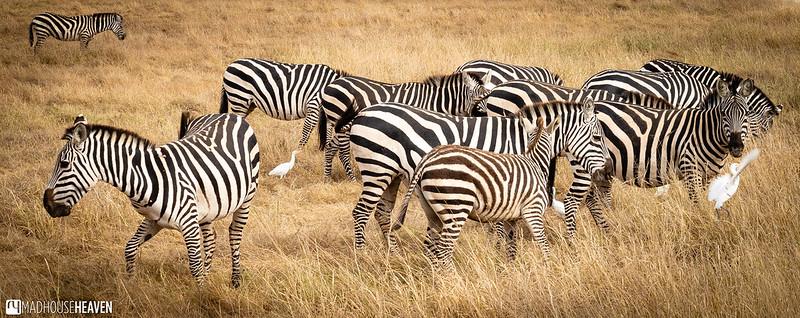 Kenya - 0352
