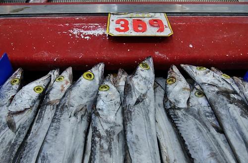 P1310046 Belt Fish, San Gabriel, Los Angeles County | by 中途下車