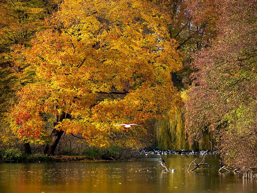 Englischer Garten München Herbst Am Kleinhesseloher See Flickr