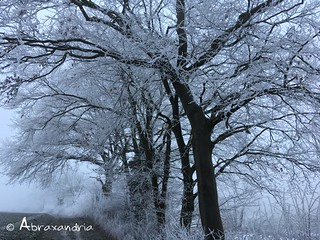 frost1 | by abraxandria