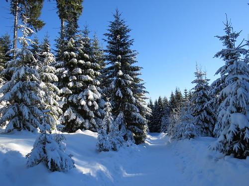 outdoor nature winter wald thuringia thüringen landscape landschaft