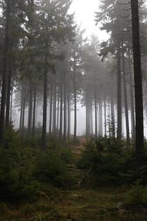 Wald   by herz-allerliebst