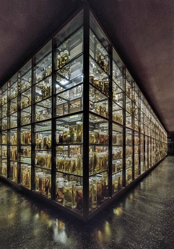 ... Natural History Storage | By Waldo.posth