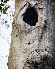 Los arboles tienen ojos #nijmegen #netherlands #eyes #tree #nature #face #hole #forest #shadow #texture #nikon #2018 #nikonistas #outdoors #parks