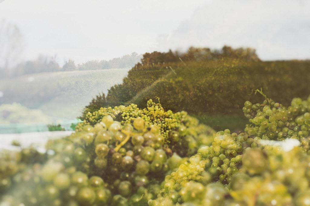 Verterra Vineyard