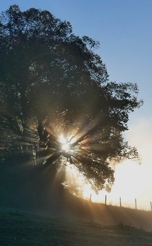 baum tree sonne sun licht light rafz 2018