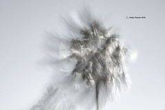 Palm Tree Blurr 8031