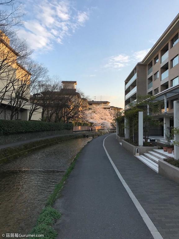 打工度假-京都生活-賞花、野餐-090