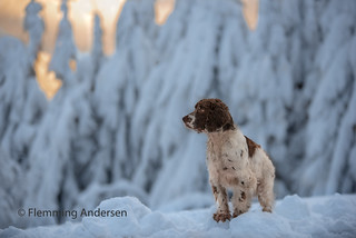 snow boy | by Flemming Andersen