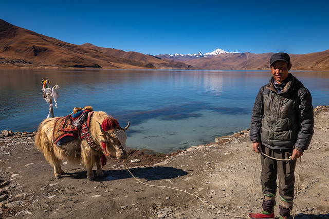 Shepherd and A Yak at Yamdrok Lake, Tibet
