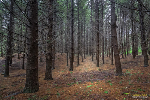 November wood