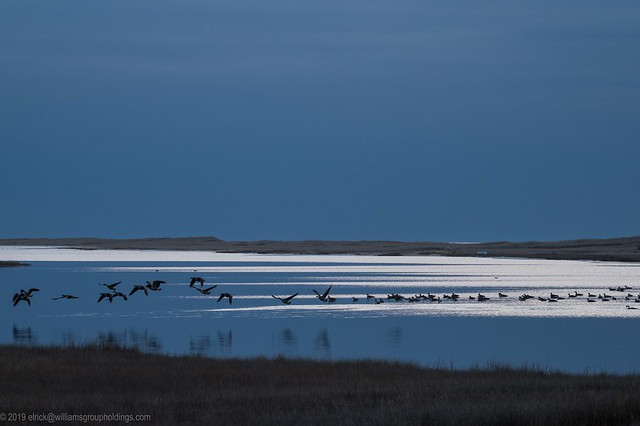 Grey Goose, Blue Sky