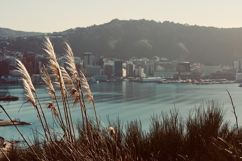 wellington newzealand city capital wellywood view